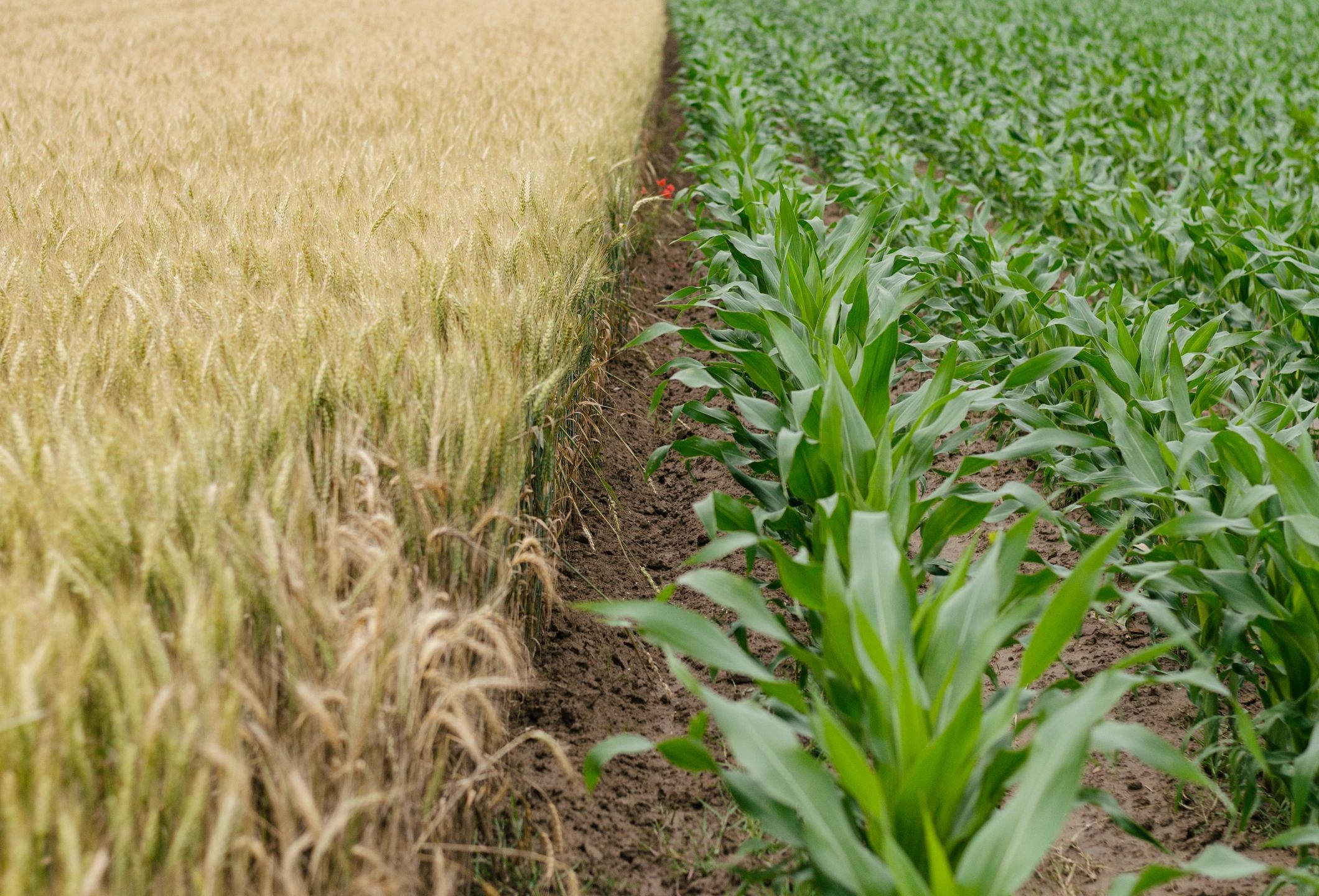 tamper evident protection for Agriculture
