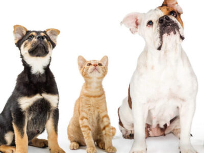 Tamper evident labels providing pet product security!